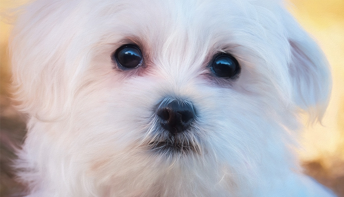 Canine Seizures: Charlie's Seizures Diagnosis